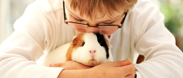 1463116958-9363-130430-guinea-pig-and-kid1