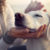 This Dog Flu Vaccine May Help Protect Owners Too