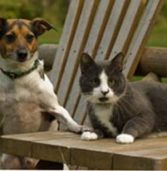 Heartworm: Keep Your Dog Protected