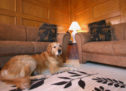 8 ways to exercise your dog indoors