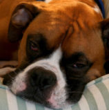 Heartworm Prevention: Keeping Your Dog Heart Healthy