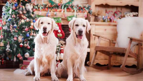 Dug Up at Dogster — Don't Miss These December 2017 Dog Events