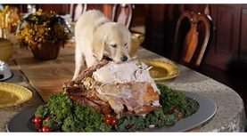 Tips for a Happy Holiday With Your Pet