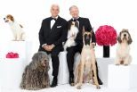 The National Dog Show (Presented by Purina)