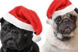 Modern Dog's 2018 Holiday Gift Guide